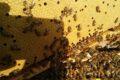 Parliamo di api